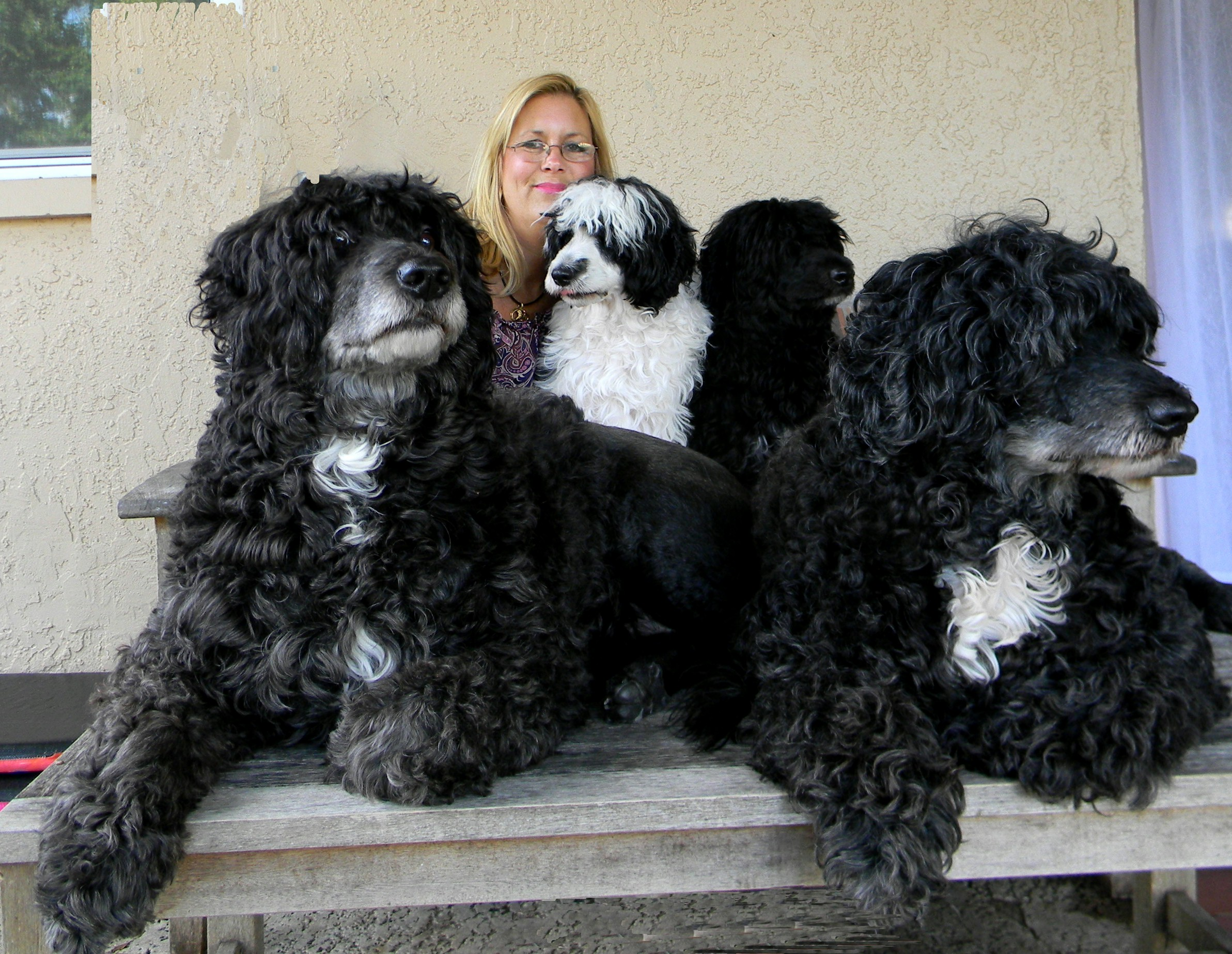 Lisa McClish-Boyles, owner of CPWD, with her dogs
